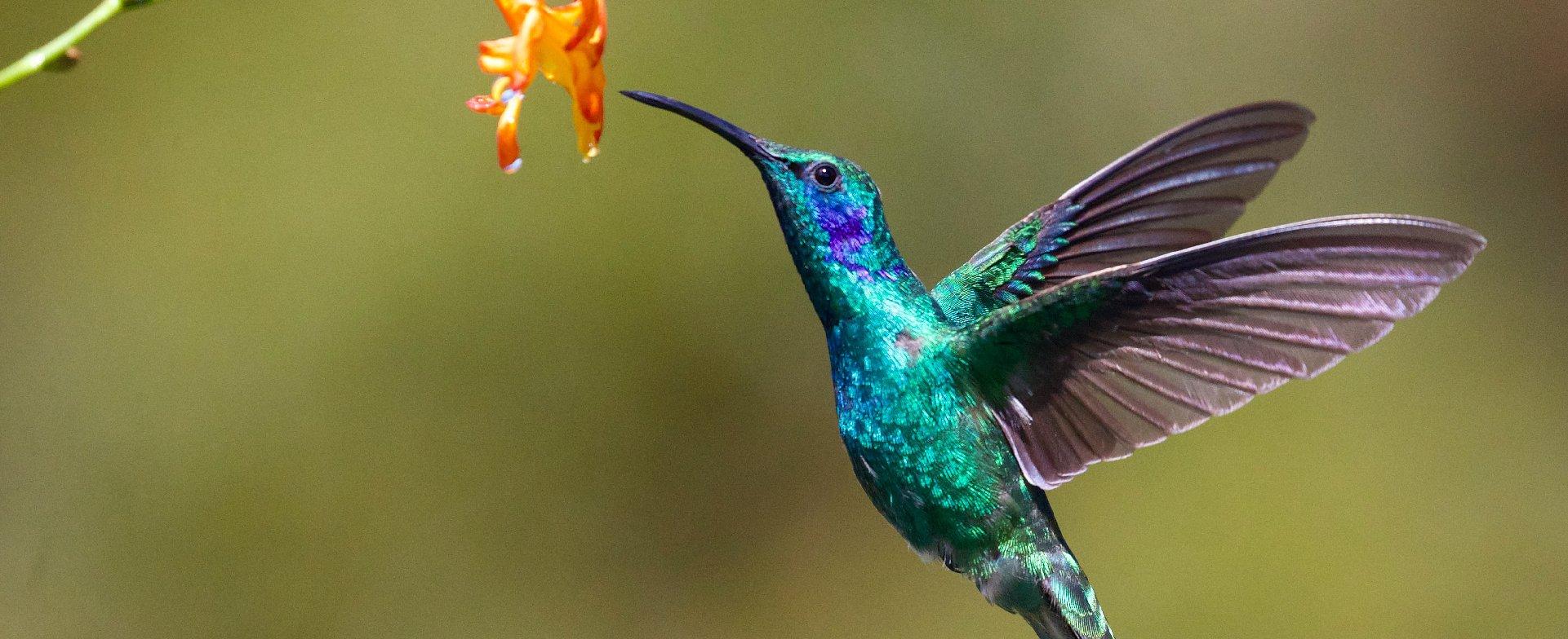 Uomini e colibrì